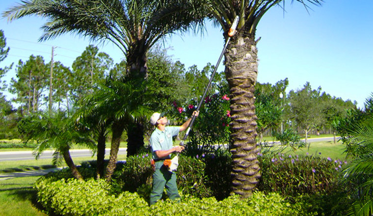 Tree Care & Arbor Services