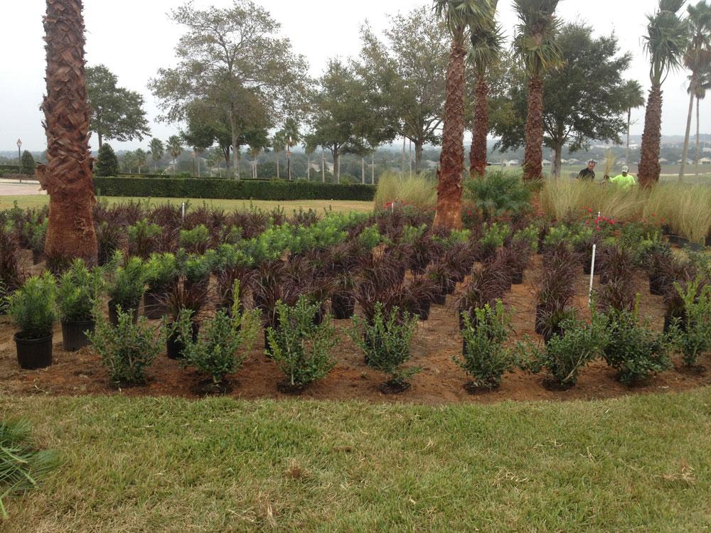 Landscape Garden Training : Orlando landscape design commercial landscaping servello son