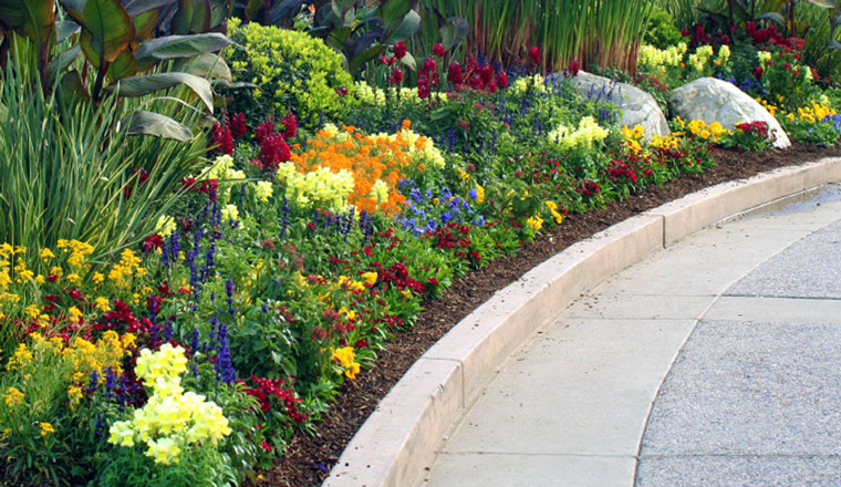 Central florida landscape service maintenance servello for Professional landscaping service