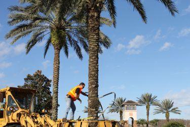 Installation Team Placing Trees