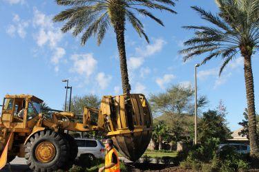 Large Tree Planting Machinery